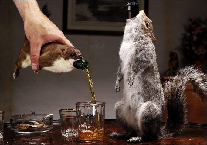 Brewdog's The End of History. Belgian Strong Ale with a 55% ABV, that comes in a taxidermied weasel. Unethical? Perhaps. Amazing? Definitely.