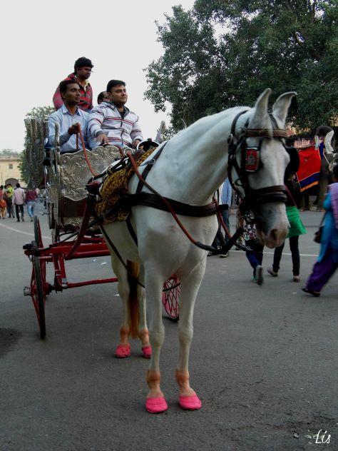 Caballo, Jaipur Pink City