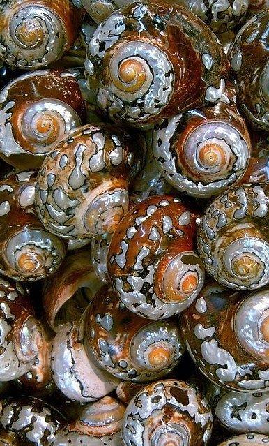 Fractal spiral forms in nature