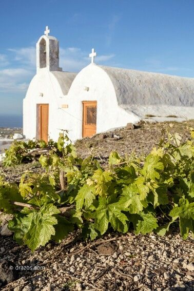 Dare to explore the wineries of the island in a journey of the enchanting world of wine and wander through the traditional kanaves (old wineries)... Santorini has so many secrets of nature to unveil... (See more at http://www.gastronomysantorini.com and http://www.winetourssantorini.com)