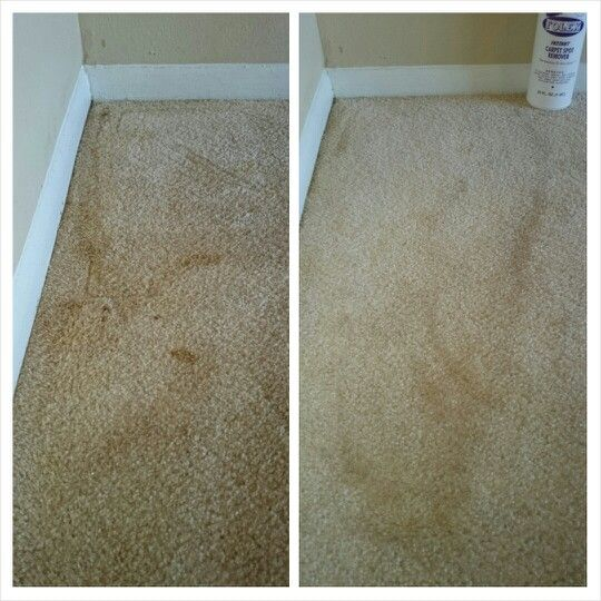 Before and after folex instant stain cleaner set in and previously treated ferret urine stains - Remove carpet stains ...