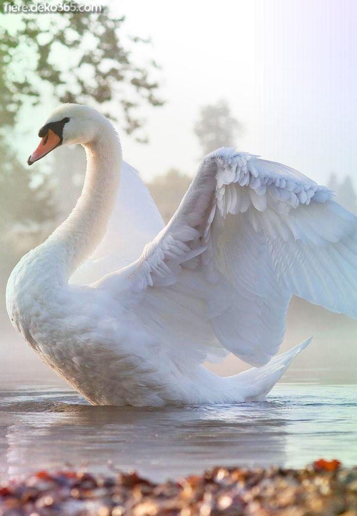 Tolle erstaunliche weiße Tiere