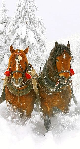 Dashing through the snow...