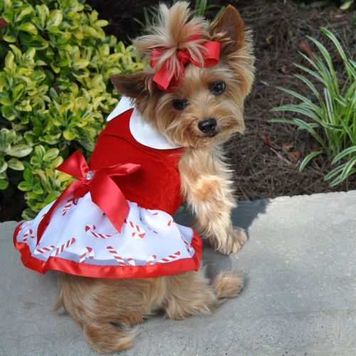 candy-cane-dog-dress
