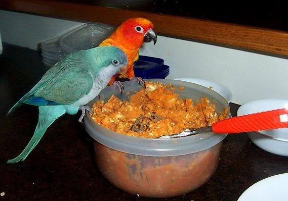 Quaker Parrot Food Recipes