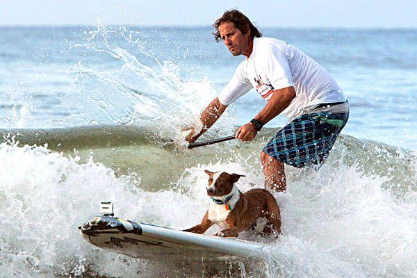 Surfing Dog Spectacular at Noosa beach in Queensland, Australia  http://www.noosafoodandwine.com.au/