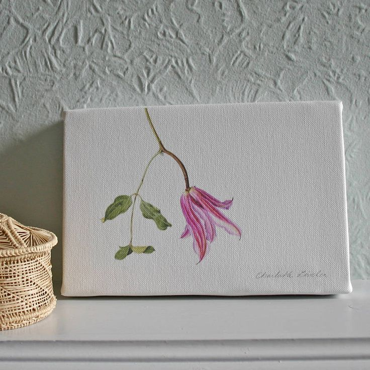 'clematis' canvas print by the botanical concept | notonthehighstreet.com