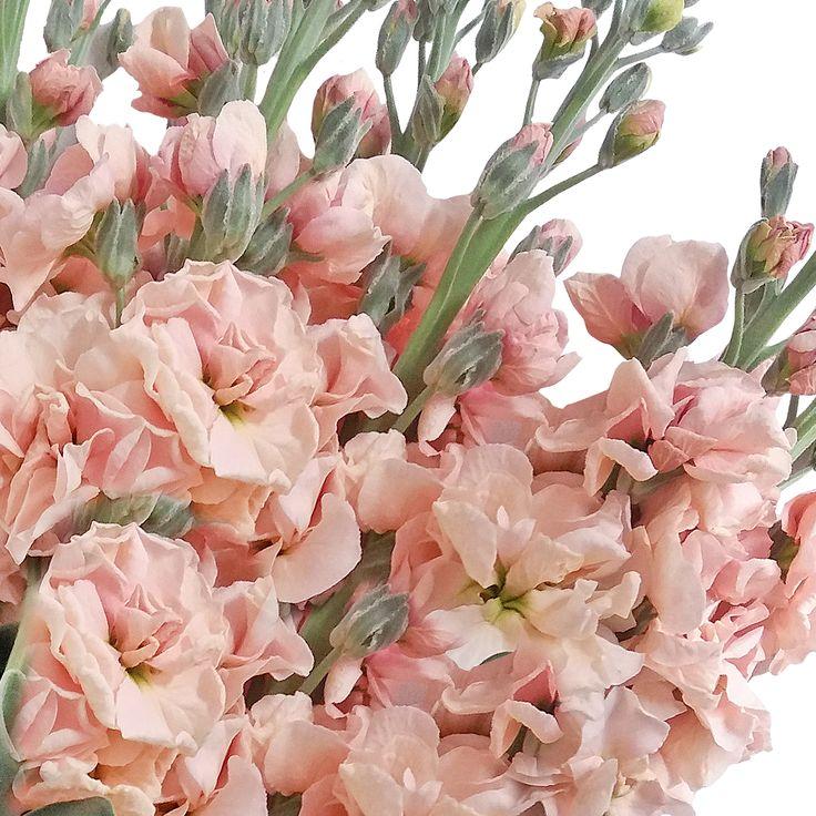 AROMATIC FLOWERS #roses,#pinkflowers,#gardening,#plants,#love,#bridal,#holidays,#anniversarygifts,#gift,#partyideas,#partydecorations,#fasshion,#christmas,#homedecor,#events,#giftsforher,#cooking,#fasshion,#style,#shopping,#onlineshopping,#online,#disney,#disneyland,#oprah,#usa,#costco,#sams,#art,#artist,#miami,#texas,#washingtondc,#newyork,#atlanta,#dogs,#family,#unitedstates,#babies,#lasvegas,#orlando,#chicago,#sandiego,#california,#sanfrancisco,#houston,#design,#losangeles,#fall,#summer,