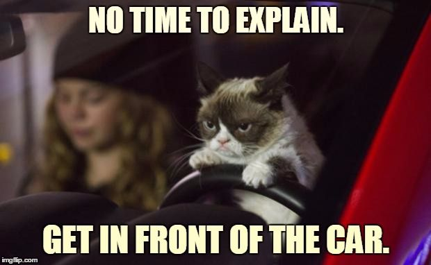 How Grumpy Cat Has Fun On Mondays :-) | NO TIME TO EXPLAIN. GET IN FRONT OF THE CAR. | image tagged in memes,grumpy cat,grumpy cat driving,monday,i hate mondays,dmv | made w/ Imgflip meme maker