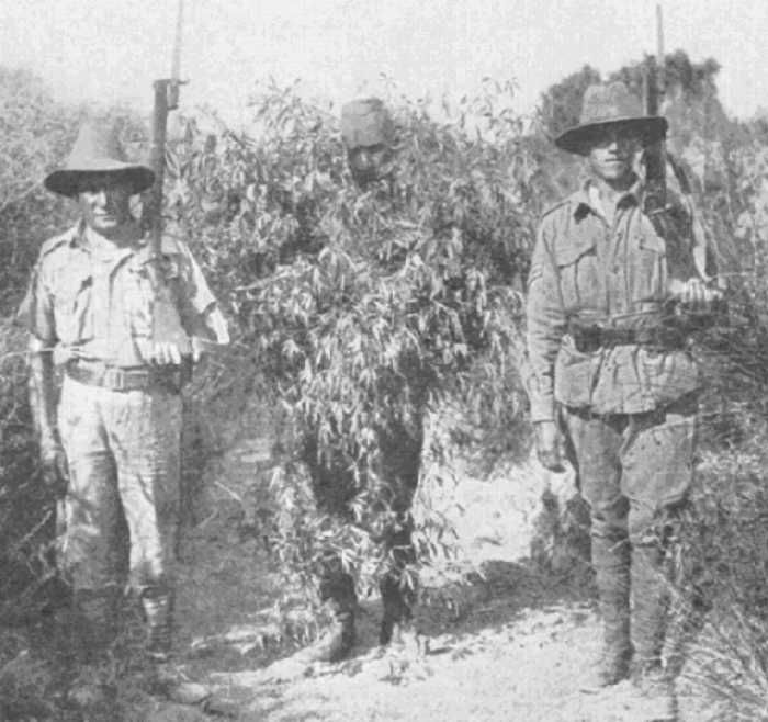June 1915, Gallipoli: a camouflaged Turkish sniper/sharpshooter is captured by two Anzacs.