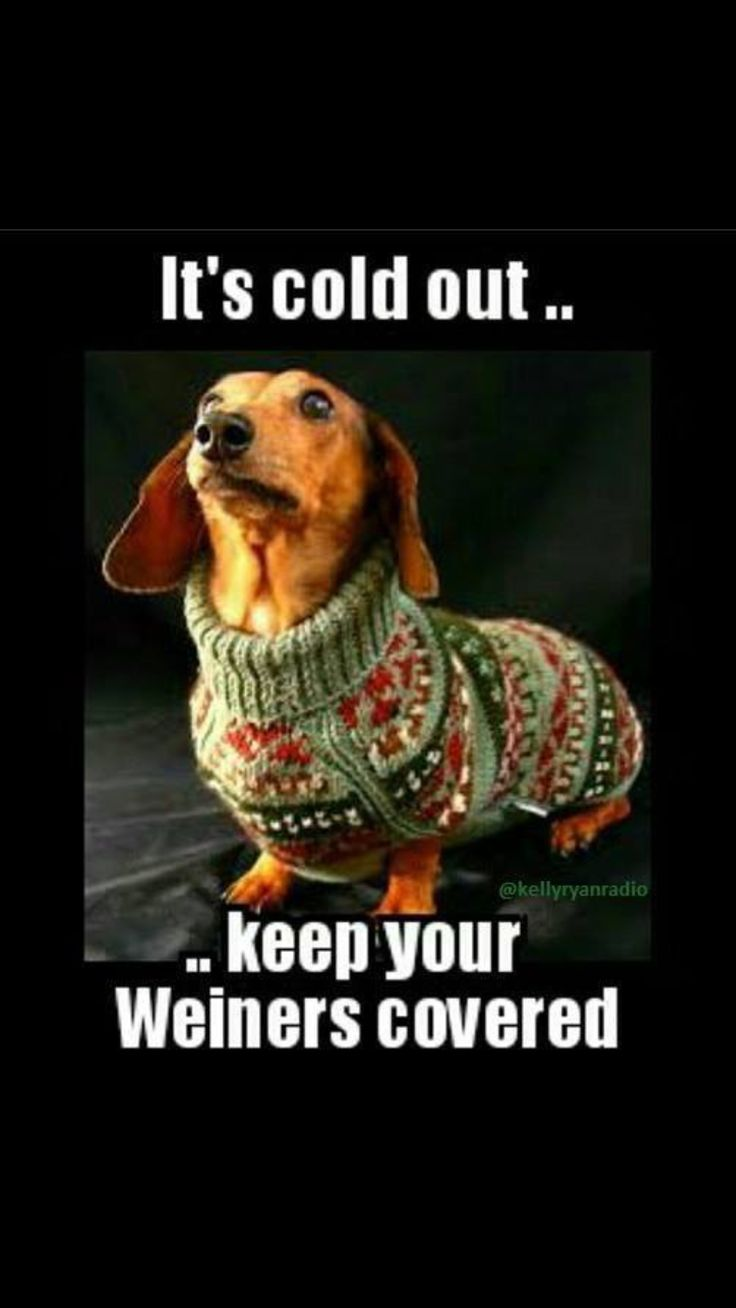 532 best images about I Heart Doxies! on Pinterest ...