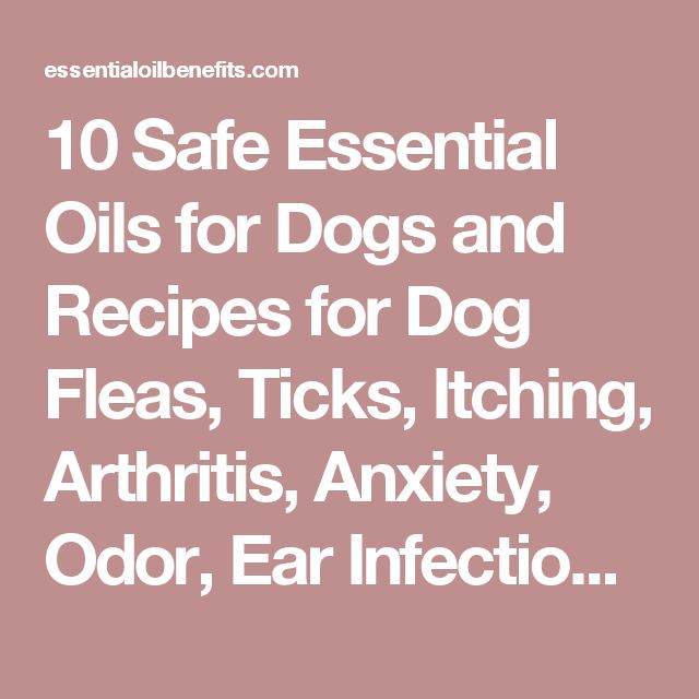 Best 25 Dog Anxiety Ideas On Pinterest Puppy Anxiety