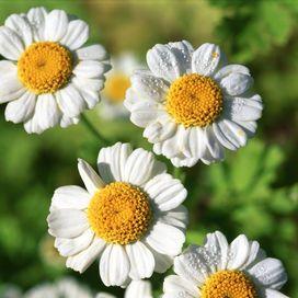 Bellezza naturale con l'olio che nasce dal sole: 3 ricette per te - Vivere meglio | Donna Moderna