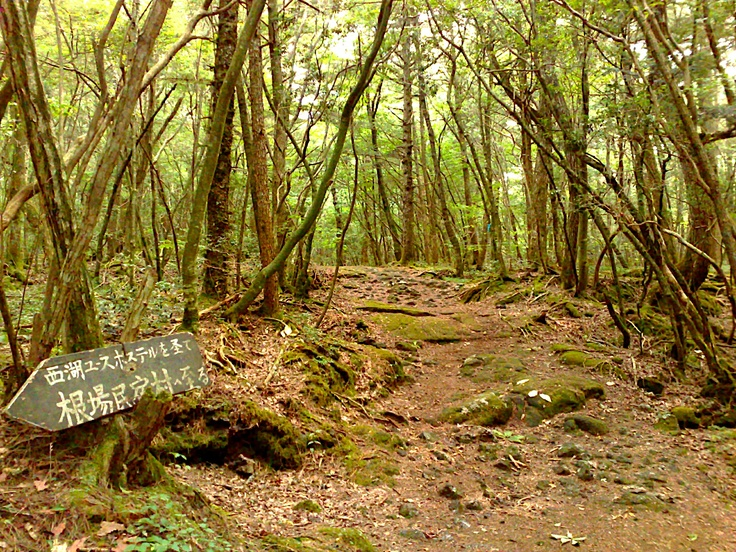 The Aokigahara Forest in Japan.