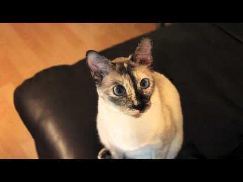 N2 The Talking Cat