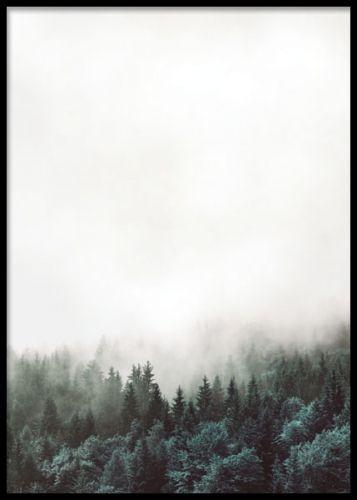 Snygg affisch / plansch med skog. Tavla med svartvitt fotografi av natur med skog och moln. Posters och prints med naturbilder och stämningsfulla fotografier. Meditativ tavla. Desenio.com / Desenio.se: