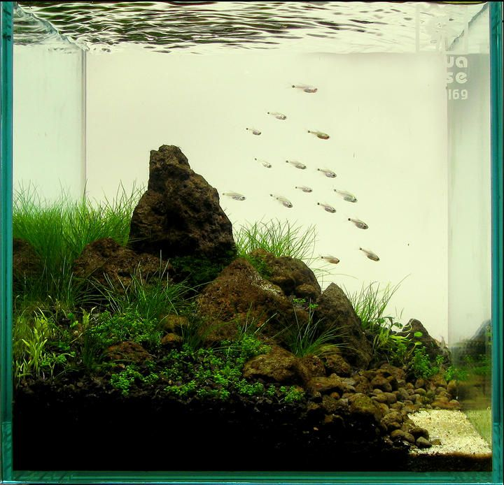 2010 AGA Aquascaping Contest - Entry #22