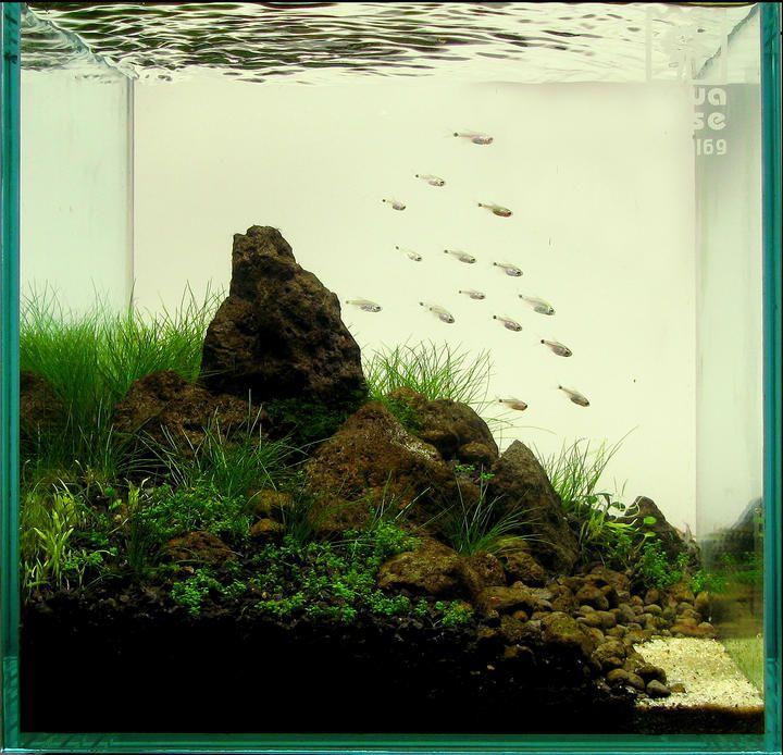 2010 AGA Aquascaping Contest - Entry #22