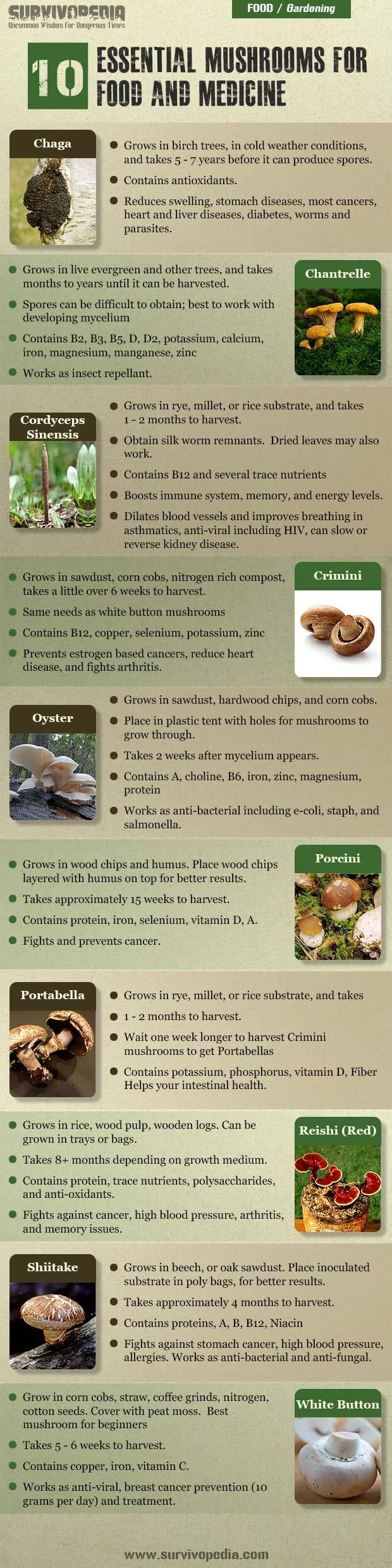 At the very least, you can start working with easy to grow mushrooms and work  your way up to more advanced strains. You will surely take a good advantage of them for survival. Learn everything you need to know about what vegetables you can grow on Backyard Liberty. http://www.prepperssurvive.com/start-a-mushroom-farm/