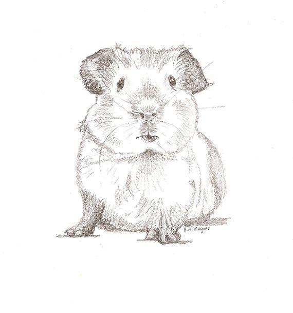 Guinea Pig Chum pencil drawing/pet art/animal art/nursery art - original animal…