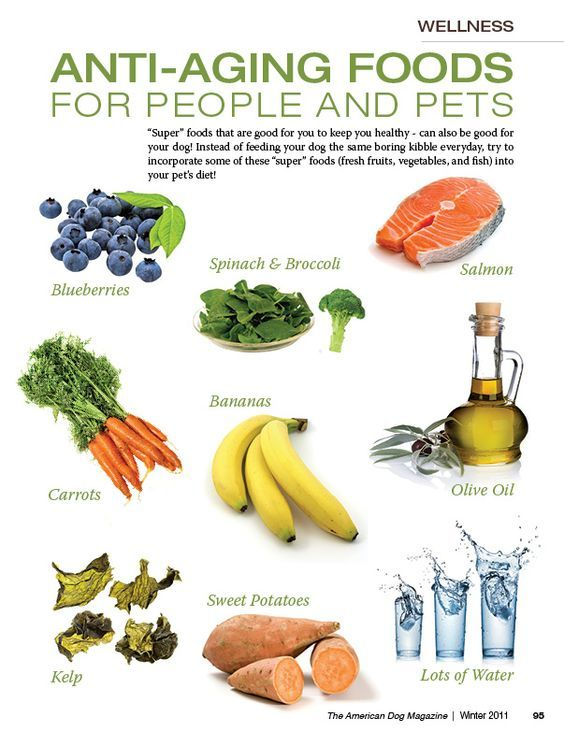 Anti-aging foods for people AND pets   Are you and your dog eating these?