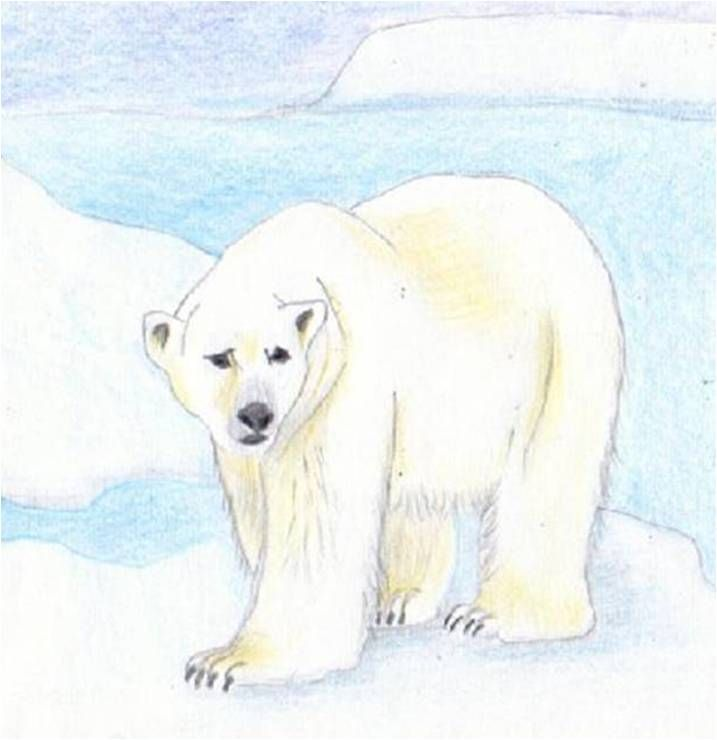 Top 73 best Ours images on Pinterest | Beautiful, Polar bears and Bear  MO09