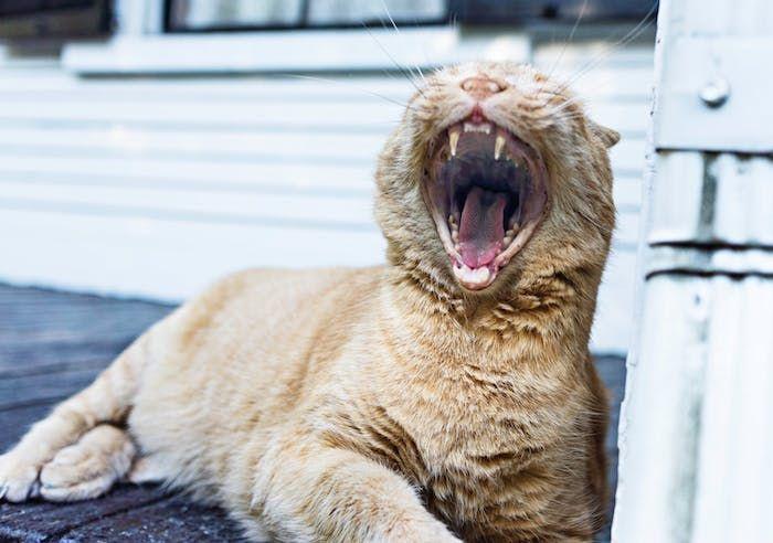 1001 Lustige Katzenbilder Und Katzenspruche Katzen Bilder Lu
