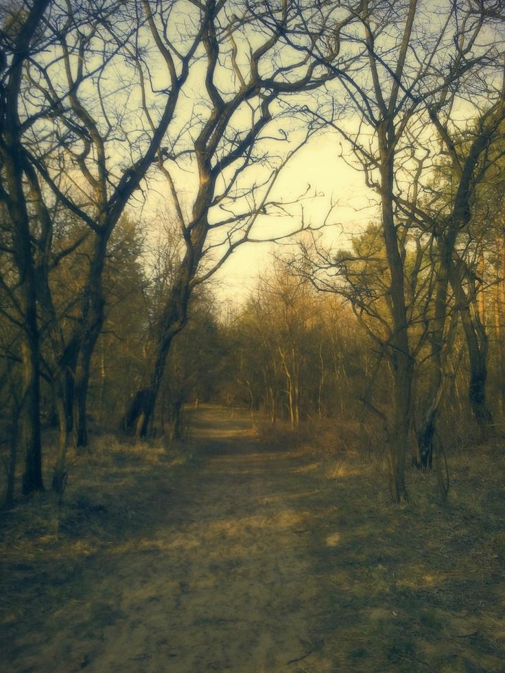 Forest in Grudziądz