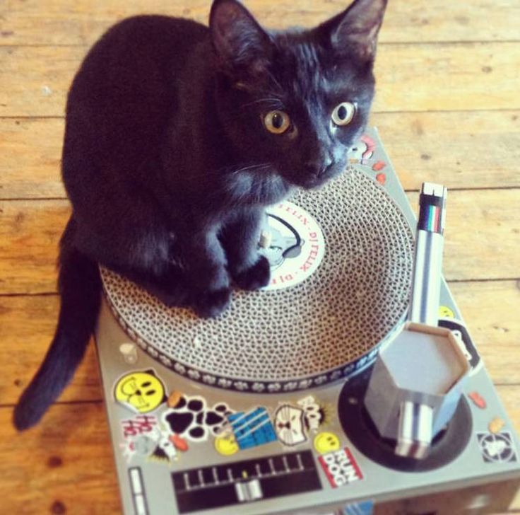Are you interested in our Cat Scratching Dj Deck? With our fun cat scratching post you need look no further.