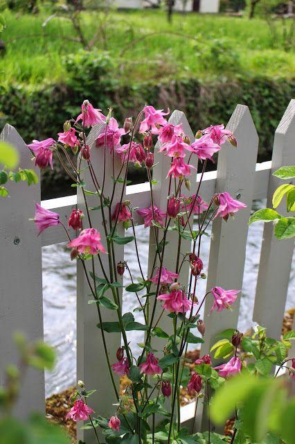 Les 25 meilleures id es concernant jardins champ tres sur pinterest design jardin paysagisme for Parterre de roses photos