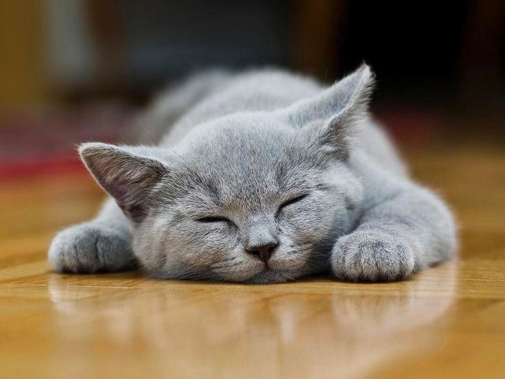 Good night ❤    #cat#cute#kittens#amazing#caty#cats🐱#catoftheday#katzen#katzenbabys#instacat#instagram#instadaily#cutecat#cutecats#catsofinstagram#cutecatcrew#katzenliebe❤️#catsofworld#catofinsta