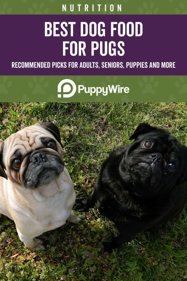 Best Dog Food For Pugs Top 6 Recommended Reviews Best Dog