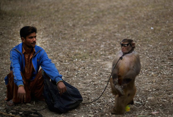 A pair of performers -- a trained monkey and his owner -- await customers on a roadside in Islamabad. (Muhammed Muheisen/Associated Press)
