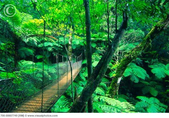 Lamington National Park, Queensland AU