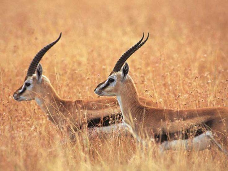 Alisagar Deer Park - in Nizamabad, Telangana, India