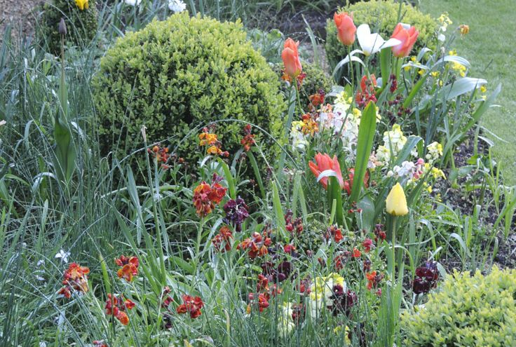 Tulips box and wallflowers Arthur Road Landscapes