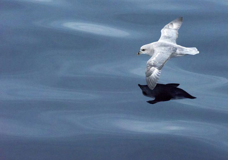 All sizes   Svalbard   Flickr - Photo Sharing!