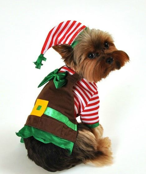 Santa's Lil Elf Helper Christmas Dog Costume