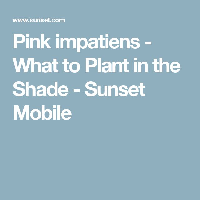 Pink impatiens  - What to Plant in the Shade - Sunset Mobile