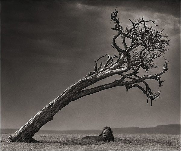 Photography    Nick Brandt
