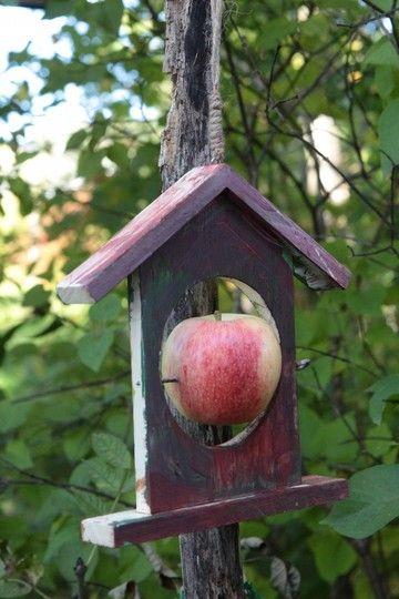 Fuglemater med rødt eple