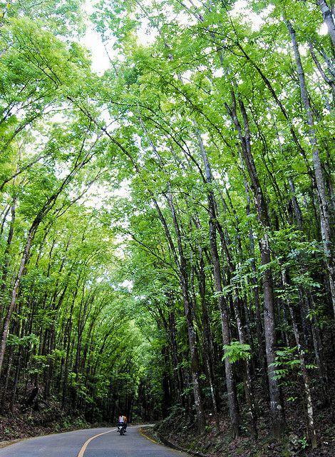 www.primaryhomes.com  Into the woods: Bilar, Bohol, Philippines