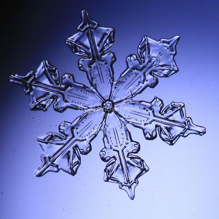 Colorado real snowflake photography