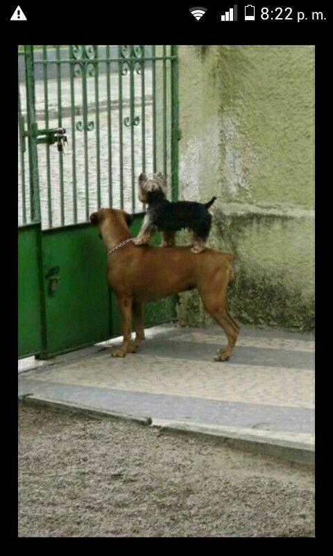 Las vecinas chismosas