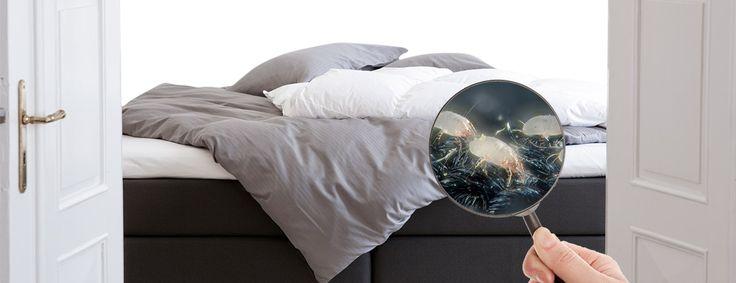 Tudtad, hogy nem csak ketten a pároddal alszotok egy ágyban? Vivenso-val nem szükséges osztozkodni....:-)