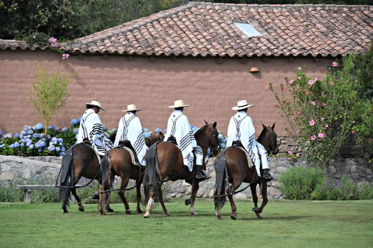 Tips on traveling to Peru with kids: check out Peruvian paso horses!