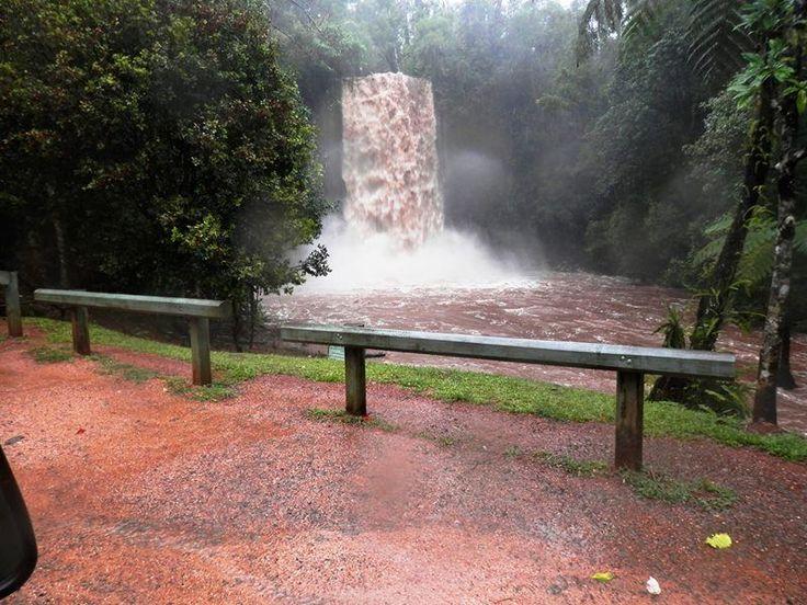 Millaa Millaa falls in flood