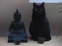 Cats and Buddhas :) We have a buddha just like this next to our fireplace and our cat, Dishy sits just like this. Pretty cute.