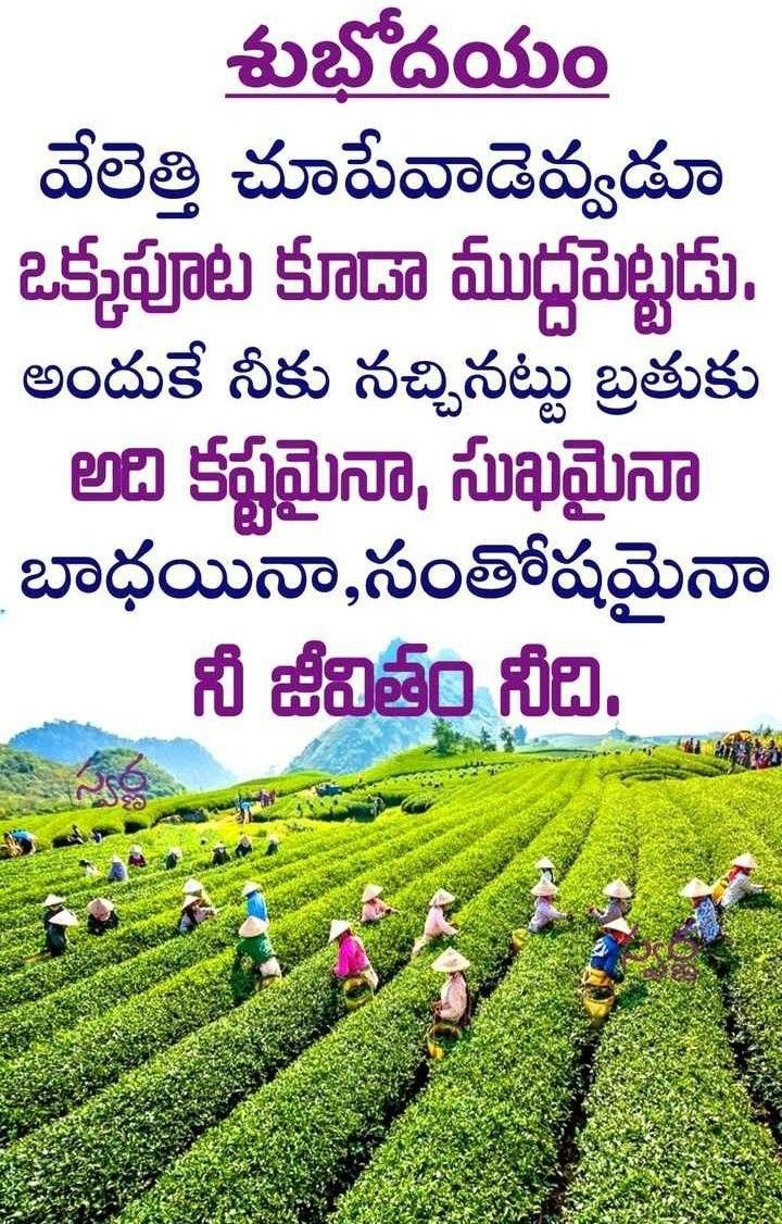 pin by murali on శుభోదయం good morning quotes good