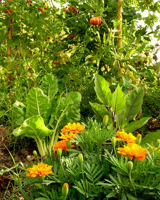 permaculture, edibles planted with ornamentals